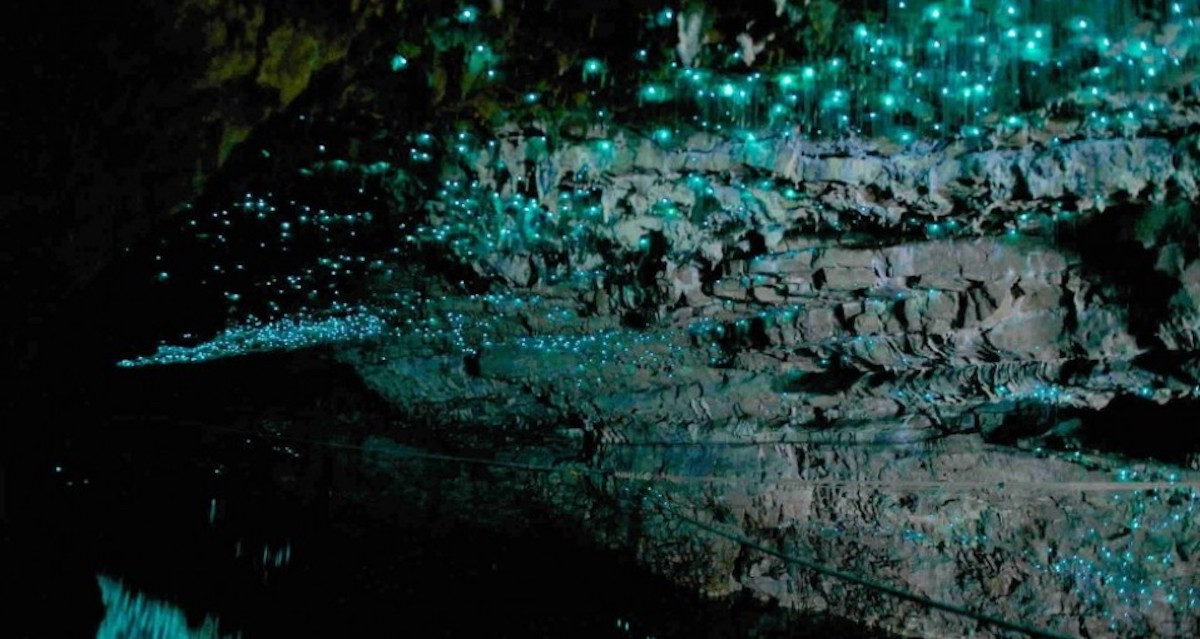 Bioluminescence of glow worms illuminating the Te Anau Cave in New Zealand