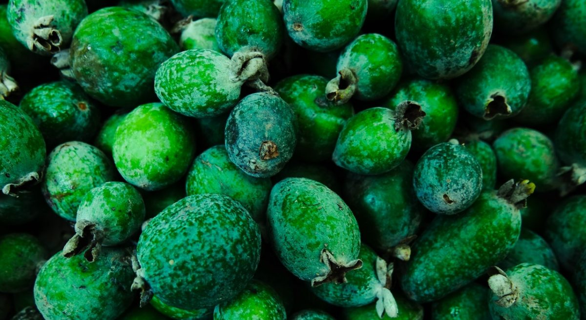 A bunch of Feijoa fruits