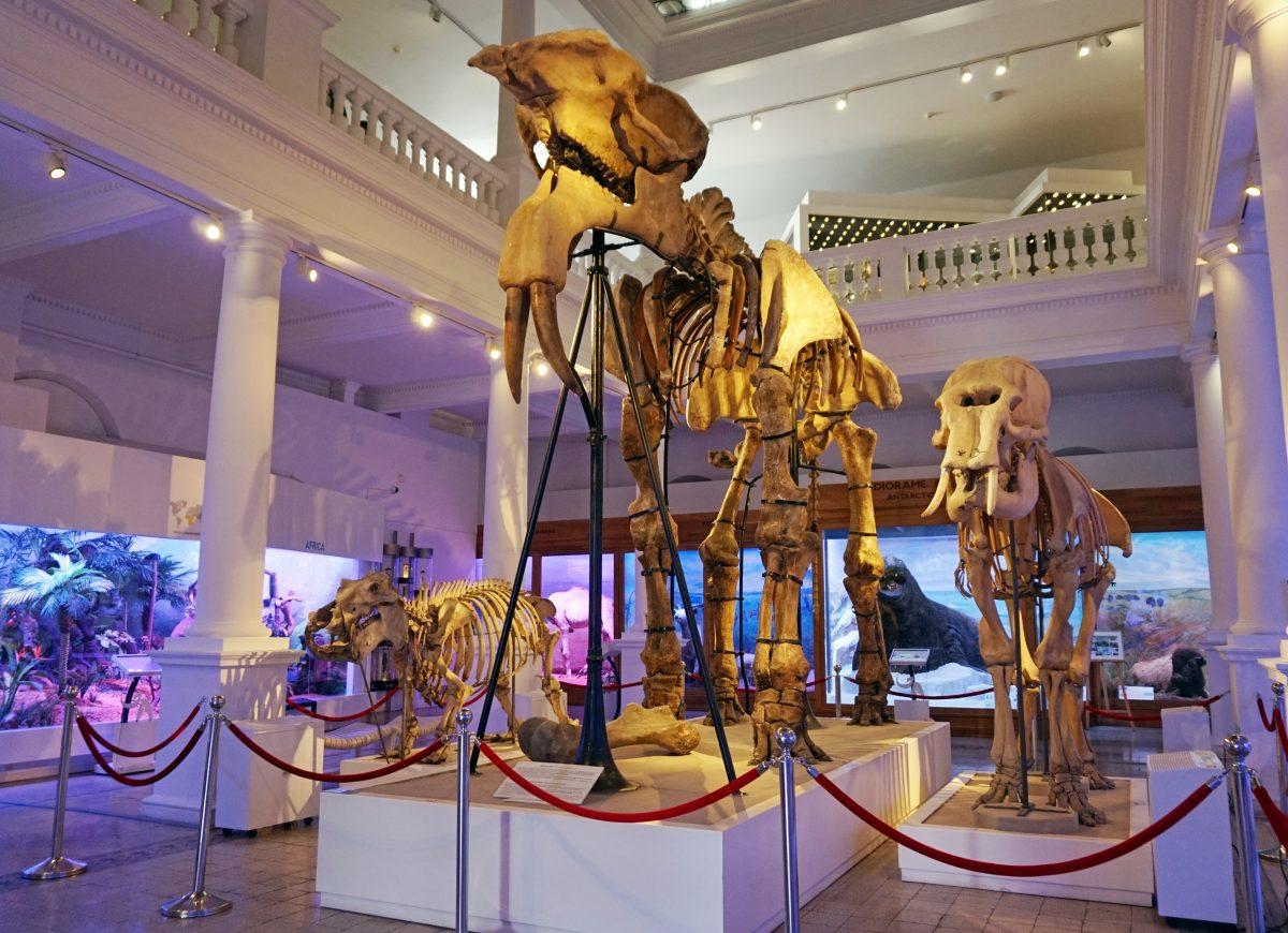 Bones of Animals at Grigore Antipa Natural History Museum
