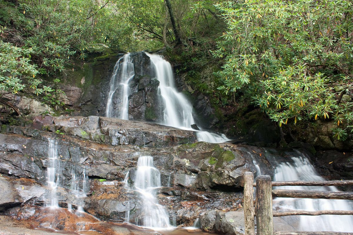Lush view at Laurel Falls