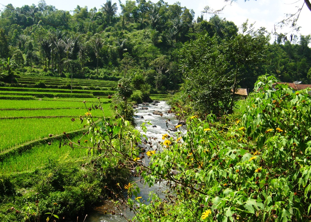 lush foliage and trees in the countryside of Bandung