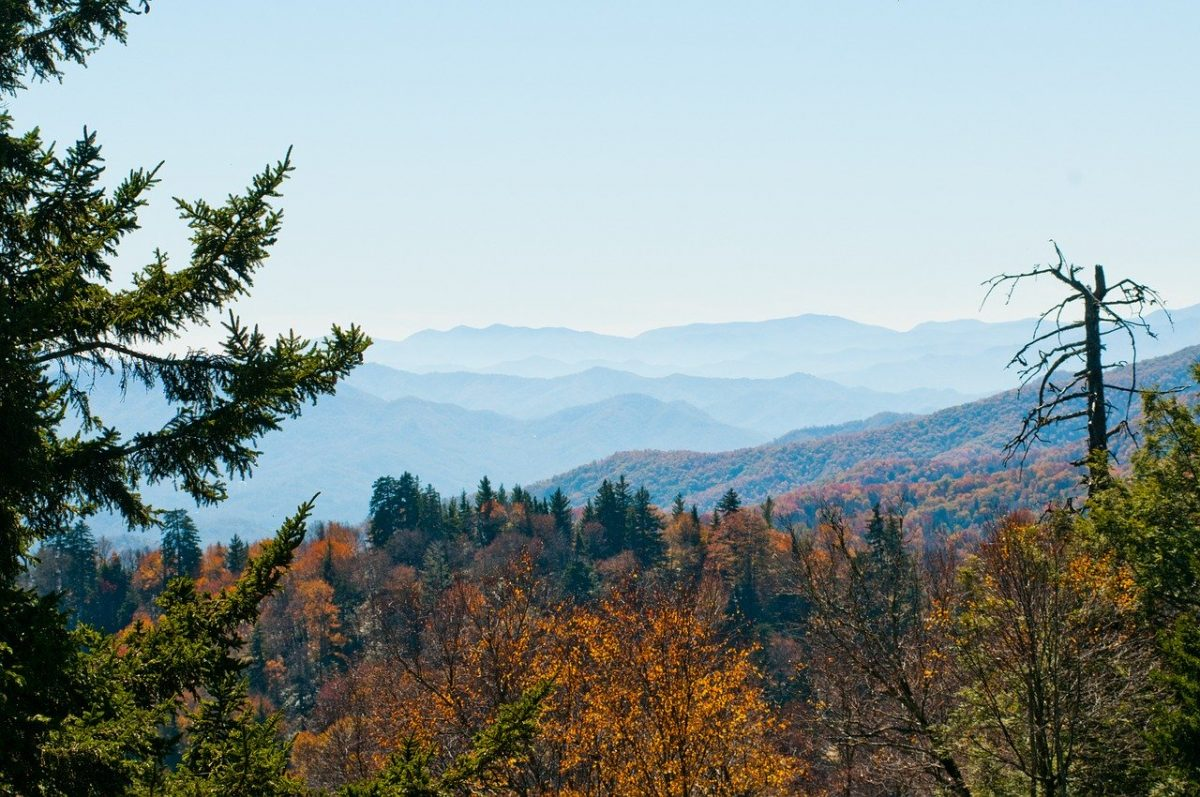 Autumn leaves on trees at the Great Smoky Mountains