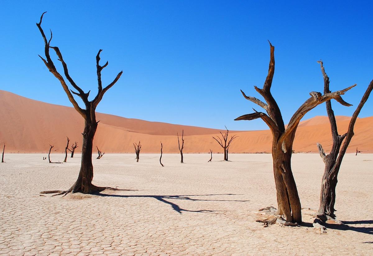 Stunning views of black dead trees against the white clay soil of Namib Desert
