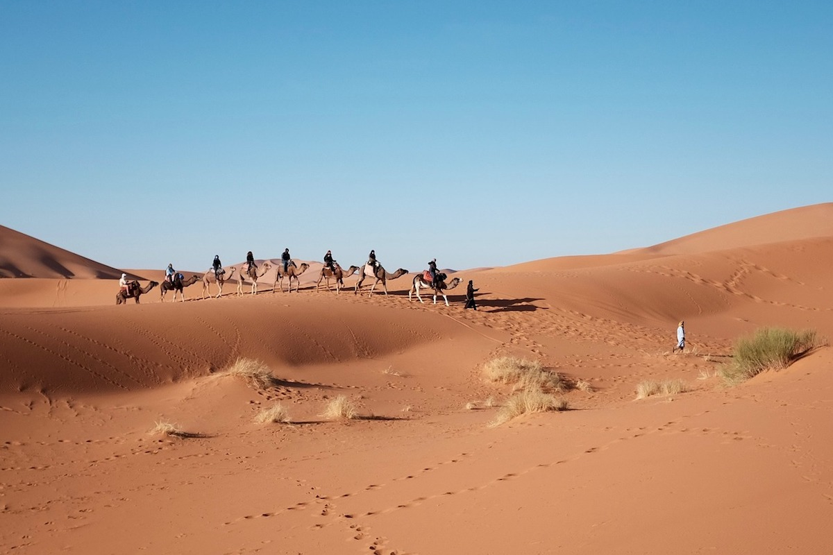 Camels travel the vast and soft sands of the African desert