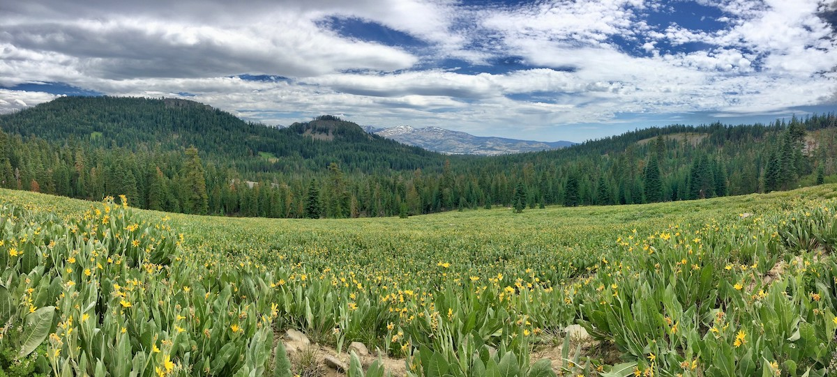 The lush view of Barker Pass Road on Tahoe National Forest