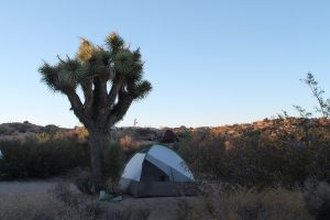 A tent pitched beside a Joshua tree in California