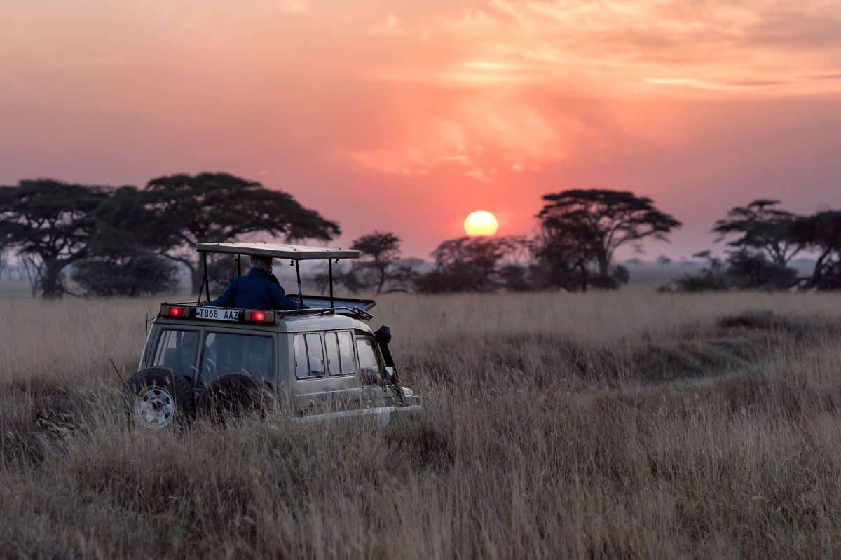A man rides on top of a safari vehicle as the sun sets