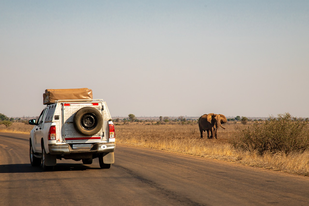 A safari vehicle rides as an elephant is seen in the wild