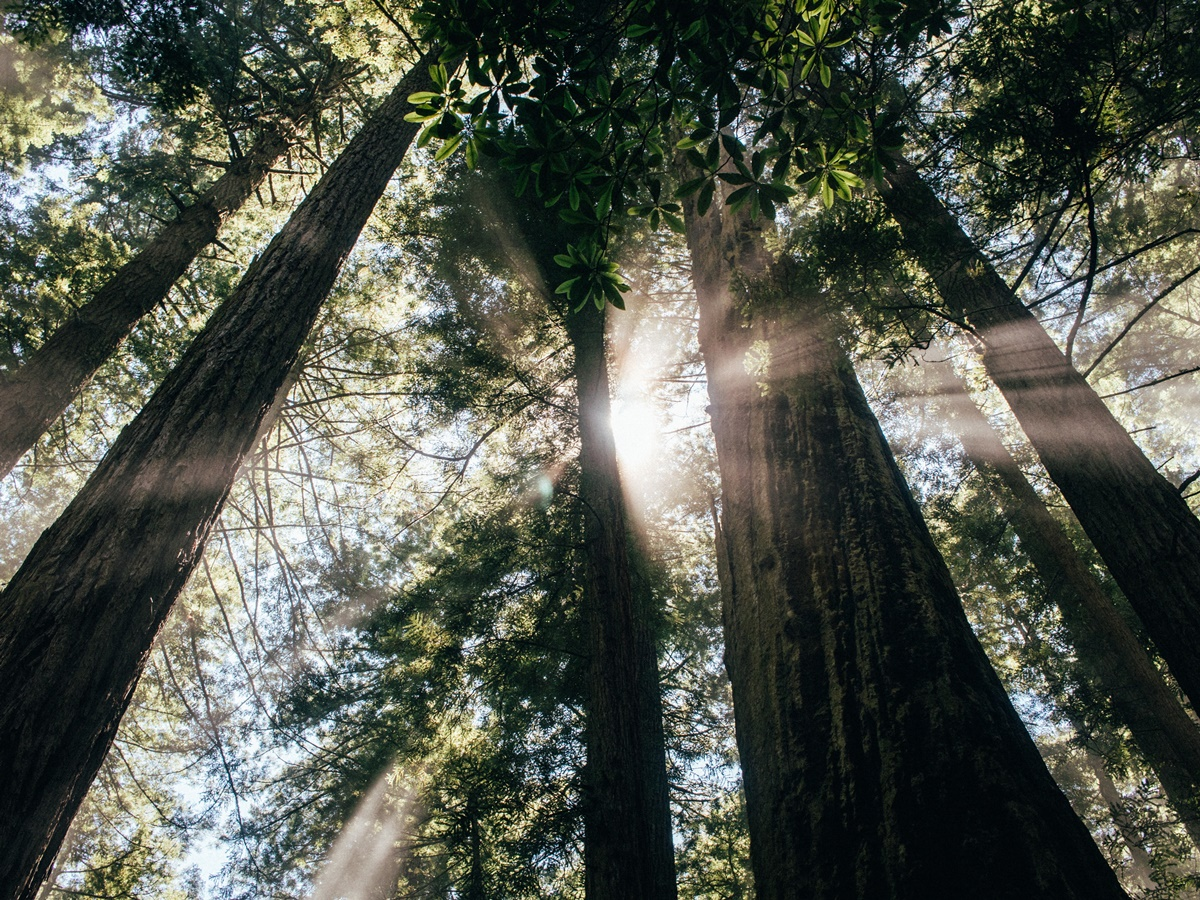 top 10 redwood parks